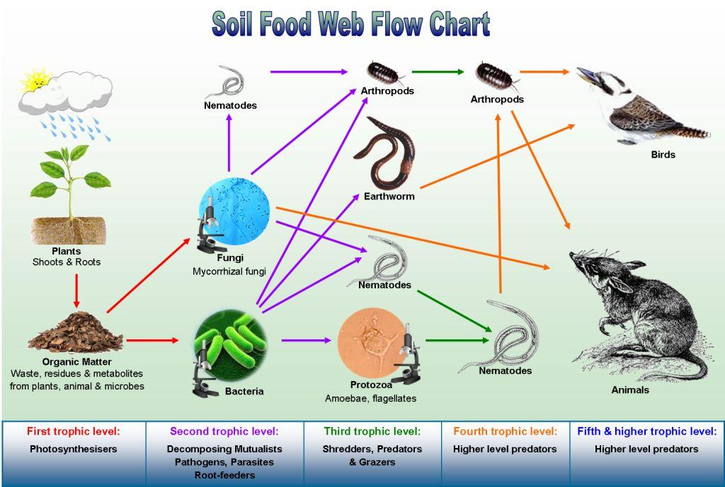 Fungi Organisms Food