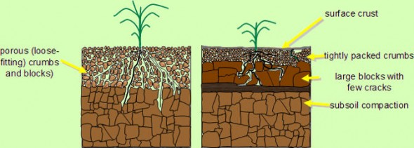 Soil Compaction TheOrangeGardener.Org