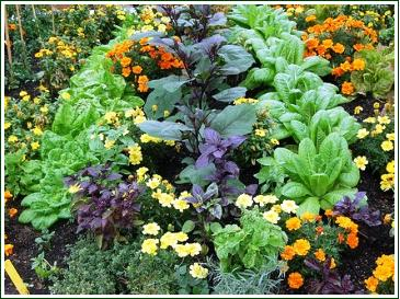 companion-planting-vegetables-herbs-flowers