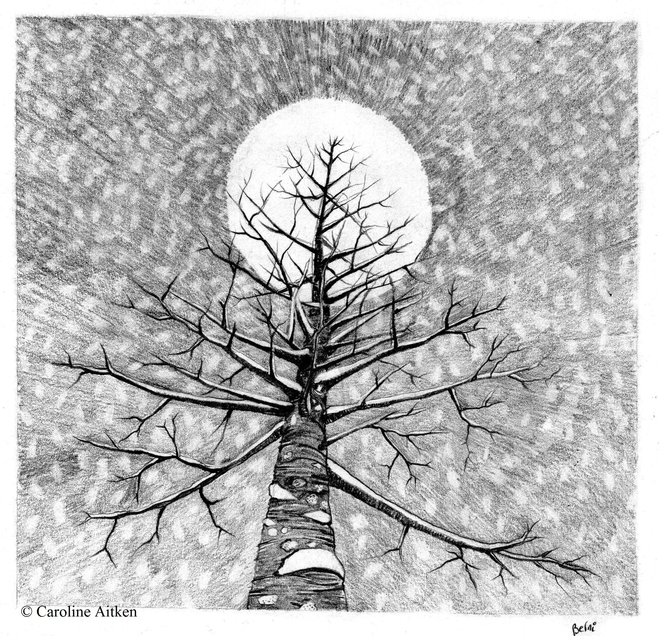 CAitken_SnowyTree